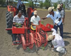 Tractor drawn vegetable transplanter