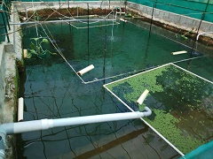 Organic agriculture and aquaculture in hilly area: A Success Story